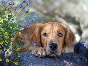 Perro de mirada triste