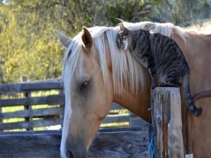 Amistad entre un caballo y un gato