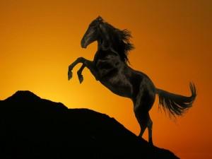 Un caballo negro sobre un fondo de tonos dorados