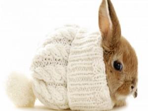 Postal: Conejo enano con un gorro de lana