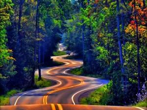 Curvas sinuosas por una carretera forestal