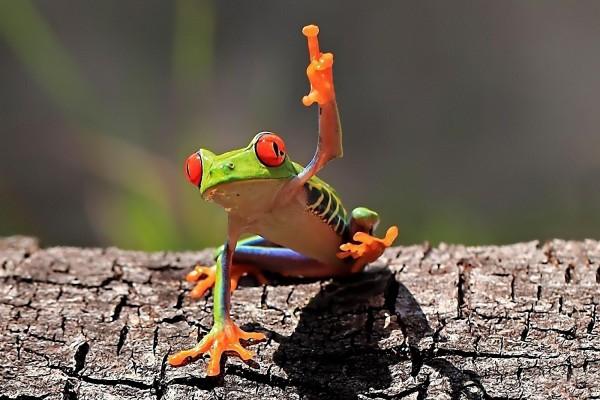 Una ranita ¿levantando la mano?
