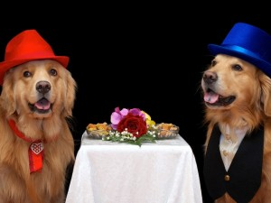 Postal: Dos perros vestidos elegantemente