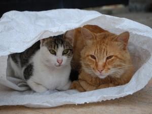 Postal: Un par de gatos metidos en un saco