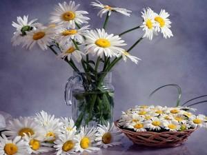 Ramilletes de margaritas en una jarra y en una cesta