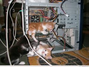 Postal: Gatitos en las tripas de un ordenador