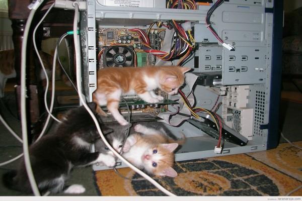 Gatitos en las tripas de un ordenador