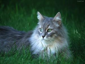 Precioso gato de ojos verdes en la hierba