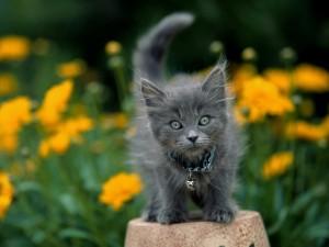 Gatito gris entre flores