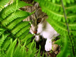 Un gato camuflado