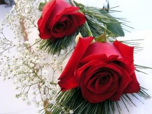Dos hermosas rosas rojas