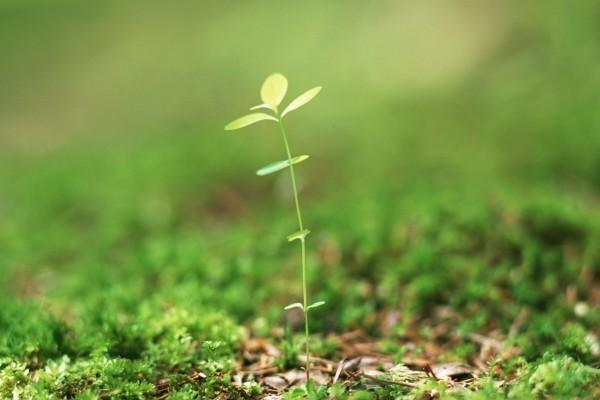 Planta brotando de la tierra