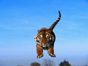 Tigre saltando bajo un cielo azul