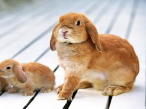 Postal: Conejo con sus crías