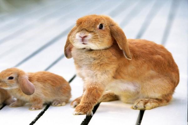 Conejo con sus crías