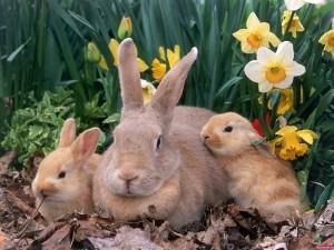 Familia de conejos