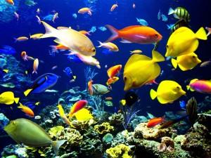 Coloridos peces tropicales