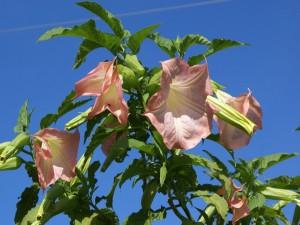 Postal: Planta verde con flores rosáceas