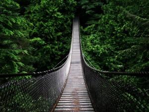 Puente colgante de Lynn Canyon, Columbia Británica