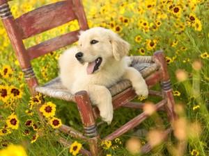 Un perro blanco en una silla entre flores