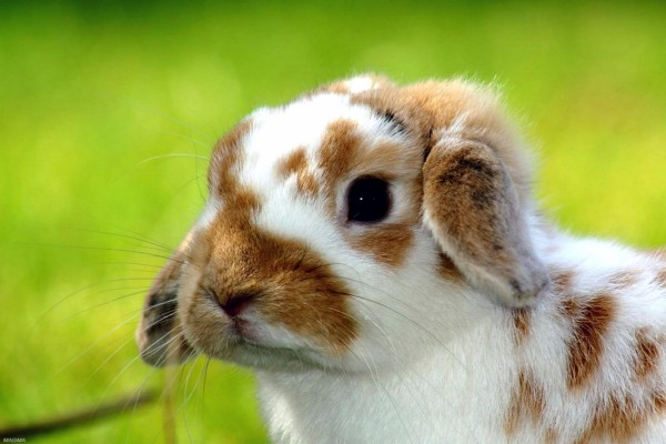 Un lindo conejito