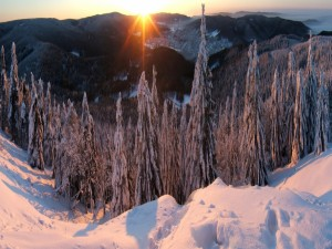 Amanecer en un bosque nevado de Alemania