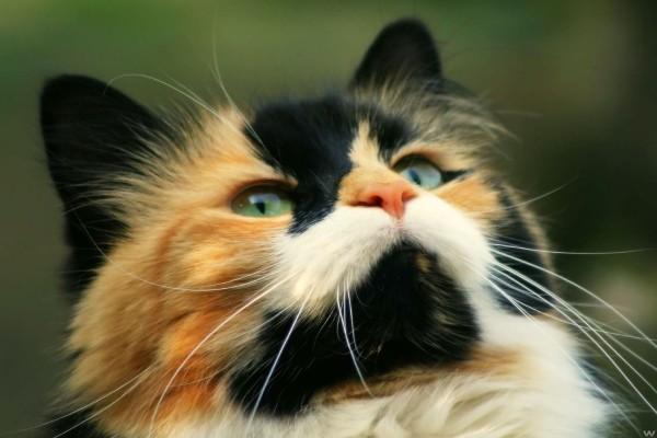 Gato con manchas