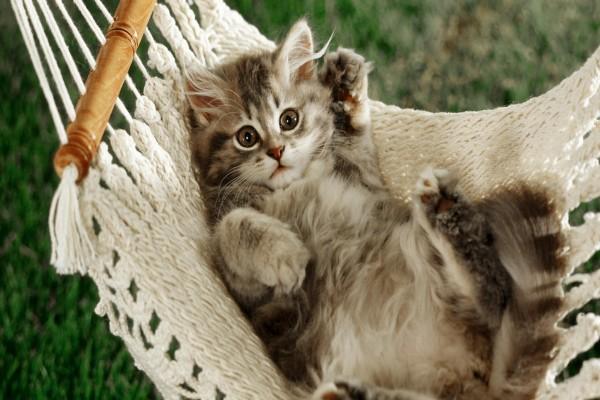 Gatito tumbado en una hamaca