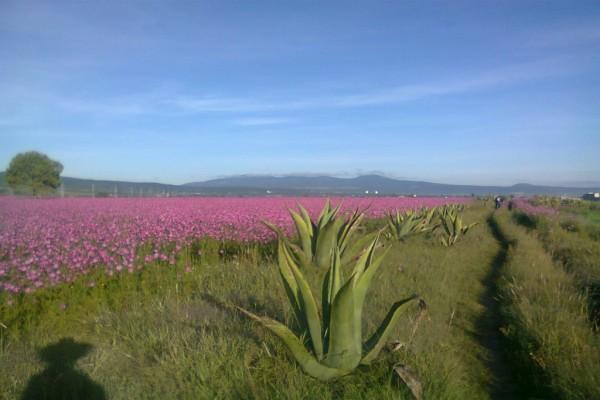 Sombra de un ranchero en un campo de flores