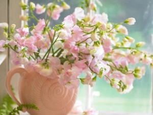 Postal: Delicadas flores rosas
