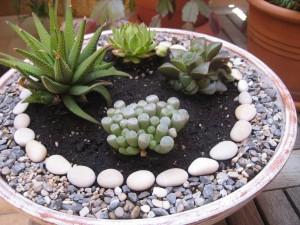 Decoración con cactus y piedras