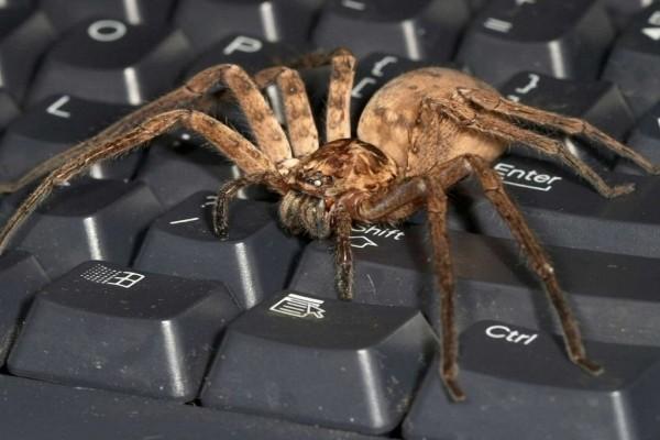Tarántula sobre un teclado
