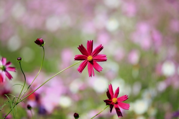Flores silvestres de color granate