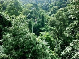 Tirolina en la selva