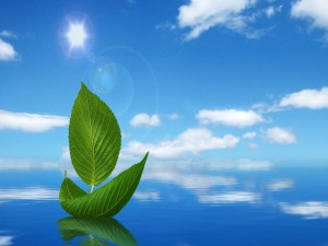 Barquita de hojas verdes