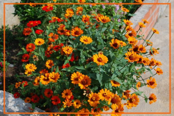 Maceta con flores naranjas