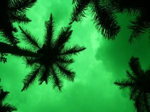 Palmeras bajo un cielo verde