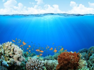 Postal: Vida en el mar