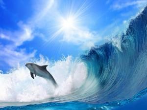 Postal: Delfín saltando una ola