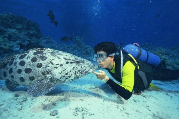 Besando a un pez