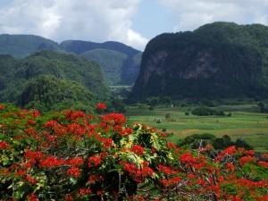 Postal: Campos verdes en Cuba