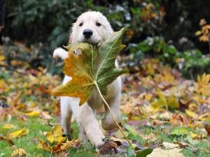 Cachorro mordiendo una hoja