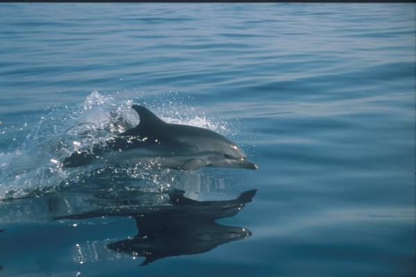 Salto de un pequeño delfín