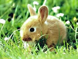 Pequeño conejo entre la hierba
