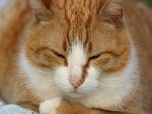 Postal: Gato dormilón
