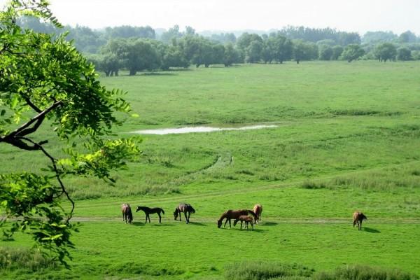Caballos pastando en una pradera en Opatowiec (Polonia)