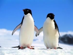 Postal: Dos pingüinos de la mano
