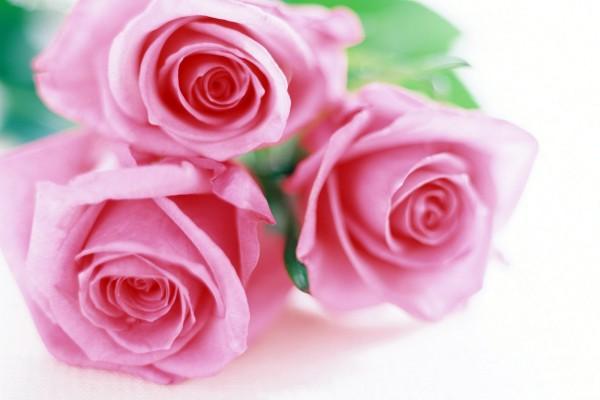 Tres delicadas rosas de color rosa