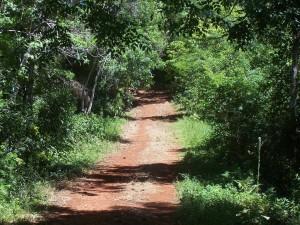 "Postal: Camino de entrada a la ""Selva Misionera"" (Misiones, Argentina)"