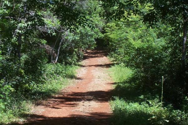 "Camino de entrada a la ""Selva Misionera"" (Misiones, Argentina)"